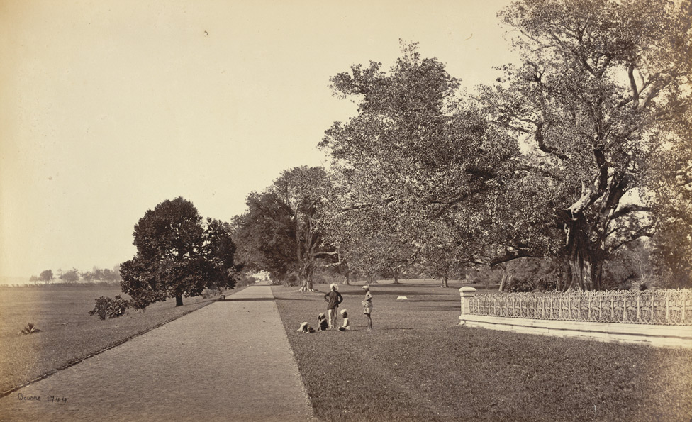 Government House Walk. Photographer: Bourne, Samuel. c1865
